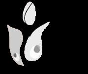 fundacja kultury papierowy motyl